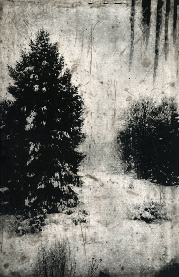 Michael Ast, etching, photopolymer, Charbonnel, Hahnemuhle, intaglio, printmaking, Winter, storm, spitbite, aquatint, icicles, evergreen, spruce