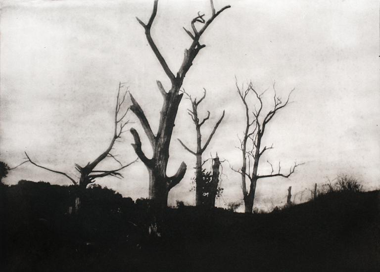 Michael Ast, photopolymer, etching, printmaking, intaglio, Charbonnel, Hahnemuhle, Ohio, trees, rural, branches