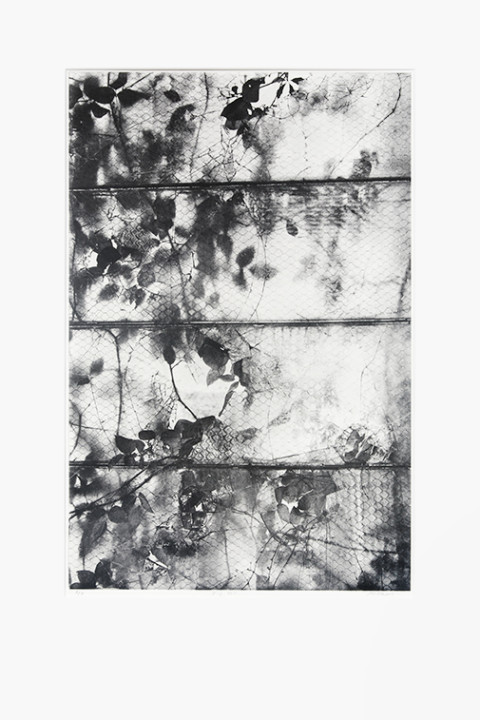 michael ast, photopolymer etching, etching, printmaking, printmaker, photo etching, photo-etching, matted, artist proof, hand-pulled print, intaglio, ivy, shattered, broken glass, tonal, monotone, michaelast