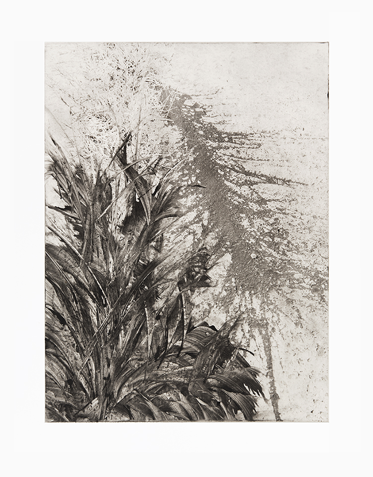 Michael Ast, monoprint, photopolymer etching, intaglio, printmaking, hahnemuhle, on press, splat, tar, abstract, tall grass