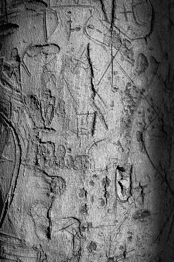 bungled, gray day, late autumn, tree carvings, woods, melancholy, upended, journal, prose