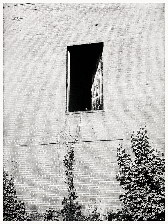 Michael Ast, photo etching, photopolymer etching, etching, intaglio, printmaking, printmaker, photographer, Kinsey, analog photography, bw photography, exit, 2nd story, industrial, ivy, brick, ajar