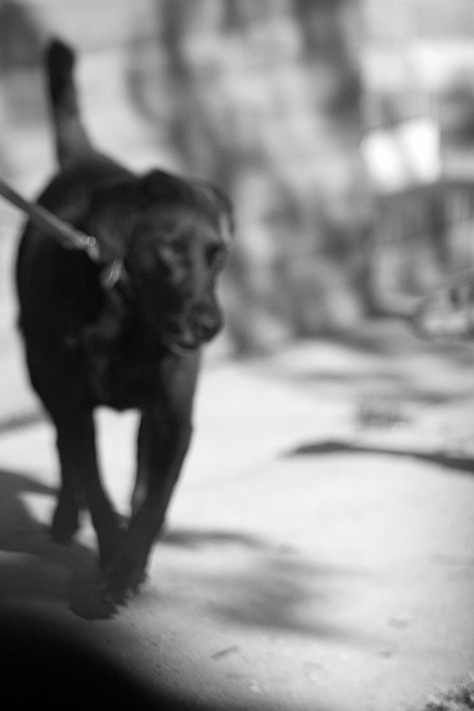 Michael Ast, trying to find the ocean, photobook, Baltimore, blur, dog, gaze, prowl, leash, on leash, self publishing